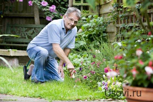 Чудесный инструментарий садовода