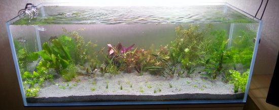 Что нужно учитывать при заказе аквариума